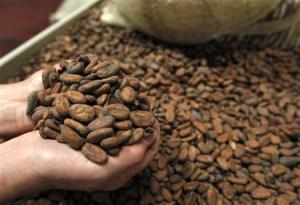 A workers at Barry Callebaut factory inspect cocoa beans in Lebbeke